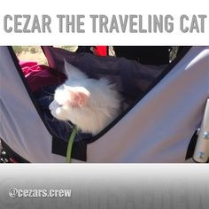 "532 Likes, 13 Comments - 🐾Cezar The Travelling Cat 🐈 (@cezars.crew) on Instagram: ""BIKE-TOUR DAY 9 - REACHING DENMARK - On this day 2 years ago we took a short boat ride over to…"""