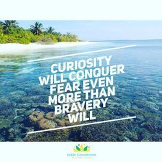 Let's be curious!  - #noble_commitment #quoteoftheday #quotes #quote #inspirational #motivation #motivationalquotes #monday #mondaymorning #curiosity #learn #instagood #instagram