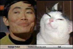 Animals That Look Like Celebrities