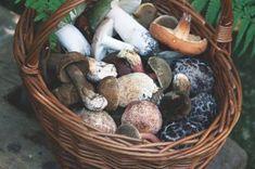 Tipy a triky Stuffed Mushrooms, Menu, Vegetables, Food, Stuff Mushrooms, Menu Board Design, Essen, Vegetable Recipes, Meals