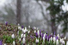 春の雪の中で : ふつうのコト