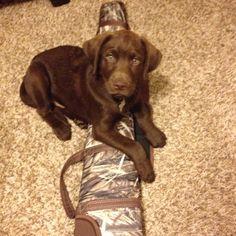 Freedom at 8 weeks! So stinkin cute! Big plans for this big man... chocolate lab