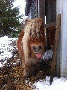 Любовь Лошадей, Красивые Лошади, Мини Лошади, Смешные Лошади, Домашние Собаки, Искусство Дельфинов, Смешные Животные, Смешные Животные, Шетландские Пони