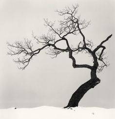 tree. Not a tattoo, but would make a great one I think.