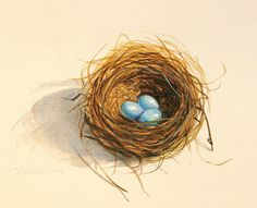 Original Bluebird or Robins Nest birds nest original watercolor painting tiny nest three egg nest bluebird by AbingdonArts on Etsy https://www.etsy.com/listing/265896911/original-bluebird-or-robins-nest-birds