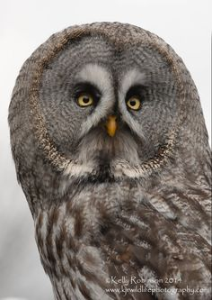 Grey Owl Portrait by Shadow-and-Flame-86 on DeviantArt..i love the angle of this photo
