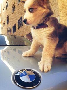 My car and my dog 😍🐶  Lamborghini, Ferrari, Porsche, Audi, Bmw Motorsport, Bmw Girl, Bmw Wallpapers, Bmw Love, Munich