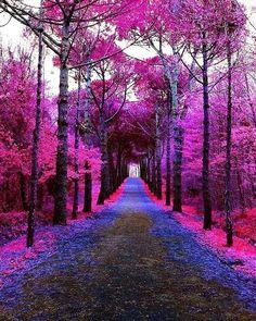 Scenery Pictures, Nature Pictures, Cool Pictures, Beautiful Landscapes, Beautiful Images, Landscape Photography, Nature Photography, Green Nature, Fantasy Landscape