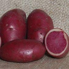 Peruna Highland Burgundy Red 1 kg/pkt (98214008)