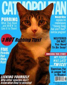 Cover of Catmopolitan!