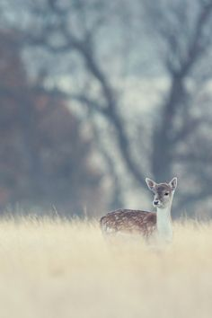 kotoripiyopiyo: 0rient-express: Untitled | by mark bridger. 鹿