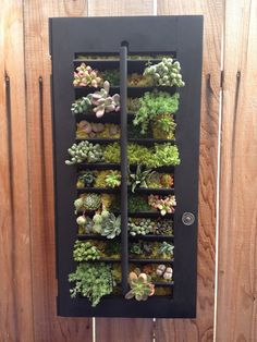 FATHER'S DAY GIFT Hanging Succulent Vertical by LoliviaGifts