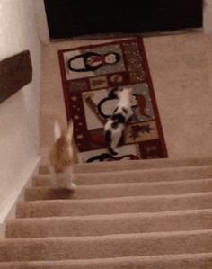 cat gif    Wanna Play Tag? You're It