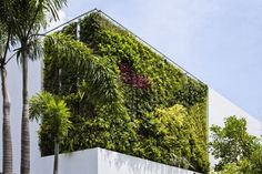 Flat roof House - with vertical garden