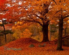 New England's red flowering trees - New England fall foliage New England Fall Foliage, Salem Mass, Photography Reviews, Digital Photography, Autumn Photography, Color Photography, Autumn Scenes, Thanksgiving, Autumn Forest