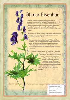 hexensache Blue monkshood Stuttering Toddler For a parent, it is a big shock when their young toddle Bonsai Seeds, Tree Seeds, Healing Herbs, Medicinal Plants, Herbal Witch, Plant Illustration, Seed Germination, Herbal Remedies, Vintage Flowers