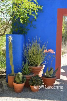 5 Heat-Tolerant Container Ideas for the Desert Garden - Southwest Gardening