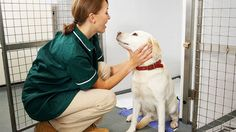 How Veterinary Administrative Assistants Can Handle Pets