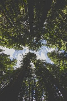 I am most alive among the tall trees. :) hmm. I love thy quote. And this picture.