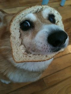 "They're also the ones who actually invented the popular internet meme called ""breading."" Fuck you, cats. 