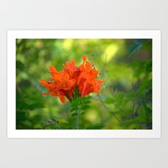 Exotic Ginger Flower 9125 Art Print by metamorphosa - $22.88