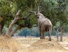 Nature Blows My Mind! Miraculous Termite Mounds : TreeHugger
