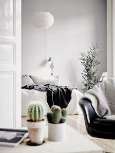 Cacti in the home