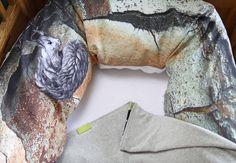 #grey #soft #velours  #blanket #baby #children #maternity #pillow #nursing #pine #bark photography #illustration #squirrel #gots #vegan #organic #fair // #grau #weich #nicki #decke #kinder #schwangerschaftskissen #stillkissen #rinde #fotografie #zeichnung #eichhörnchen #bio #öko