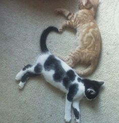 Tail and paw heart.