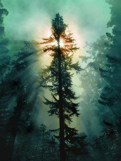 Redwood National Park, USA / 35 Fascinating Photos of Nature