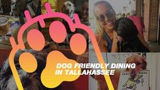 Dog Friendly Restaurants : Visit Tallahassee Florida State University, State Government, Capital City, Historical Sites, Dog Friends, Small Towns, Great Places, Restaurants, Dogs