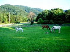 Horses of Bluebird Farm, Virginia