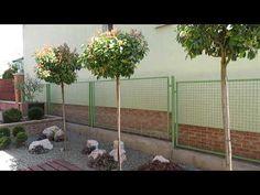 Nyugalom szigete 4. tél után, április - Kerttervezés, kertépítés ötletek... Facebook, Plants, Plant, Planets