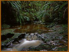 Tangarakau Gorge Stream - John Greenwood