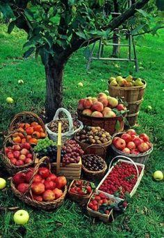 Autumn harvest Abundance of beauty