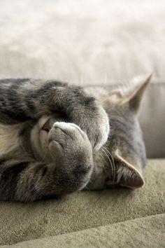 Cat- ♡ Want more cute pins? Visit @personallikes ♡