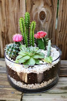 Cteate a planter for your garden or room. Use a glass bowl layered with coloured stones and soil for the perfect design to match your decor!