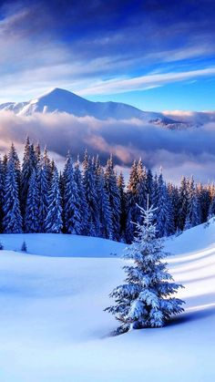 snow and landscape image
