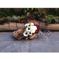 Anemones and some friends in some grape wood in front of a fallen log inspired succulent garden. Wood Chandelier, Anemones, Succulents Garden, Florals, Floral Design, Inspired, Friends, Instagram Posts, Inspiration