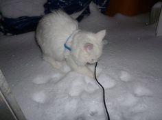 Kitten's first snow...