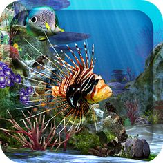 3D Aquarium Live Wallpaper HD - Apps on Google Play Aquarium Live Wallpaper, Aquarium Backgrounds, Bench Plans, Live Wallpapers, Bambam, Projects To Try, Animation, Fish, Animals