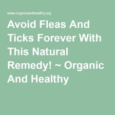 Avoid Fleas And Ticks Forever With This Natural Remedy! ~ Organic And Healthy