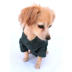 Small Pet Buttonup Shirt in Dark Green Plaid by PawApparel on Etsy, $27.00. Look at these ADORABLE dog clothes! Search PawApparel on Etsy.com.