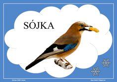 BLOG EDUKACYJNY DLA DZIECI Montessori, Back To School, Birds, Teaching, Education, Winter, Animals, Speech Language Therapy, Winter Time