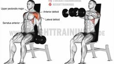 Seated dumbbell front raise exercise Target your anterior deltoid and synergistically work your lateral deltoid, upper pecs, and serratus anterior with the seated dumbbell front raise. Best Gym Workout, Workout Guide, Chest Workouts, Gym Workouts, Best Shoulder Workout, Shoulder Exercises, Stomach Exercises, Abdominal Exercises, Front Raises