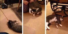 Μια γάτα έχει βρει τη λύση για να αποφεύγει τη βαρετή βόλτα έξω από το σπίτι με το αφεντικό της.…