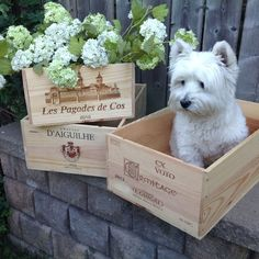 Allie in one of our new crates #winecrates