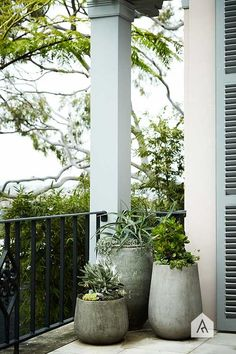STYLE TIP   Tree Potting | Olive Trees | Pinterest | Rooftop, Contemporary  And Gardens