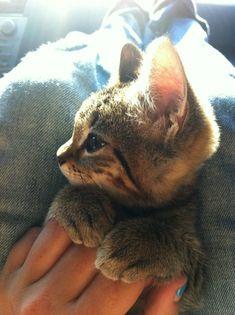 Котейки - http://pinterest.com/nfordzho/lovely-animals/