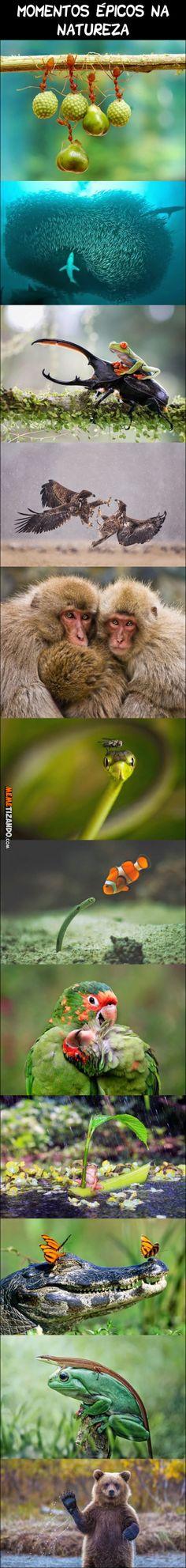 Momentos épicos na natureza